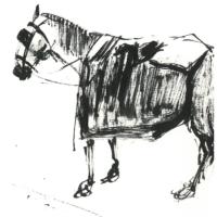 Tierstudie | Tuschezeichnung