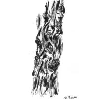 Baumstudie | Tuschezeichnung