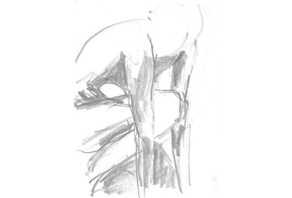 Akt   Zeichnung
